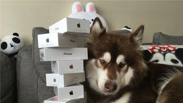 La mascota mejor conectada: Hijo del hombre más rico de China le regala ocho iPhone 7 a su perra