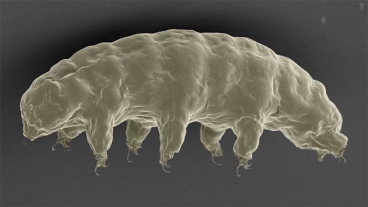 Esta increíble proteína animal podría proteger nuestras células de los rayos X