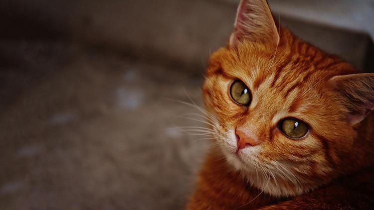 Un gato sobrevive más de un mes bajo los escombros tras el sismo en Italia