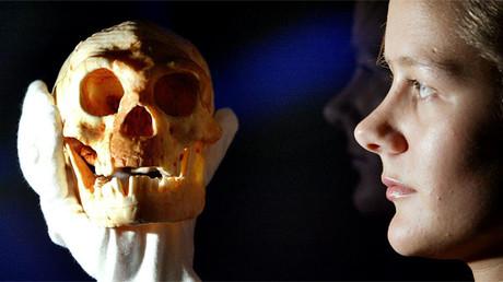 Un modelo de un cráneo hallado en la una isla indonesia en manos de empleada del Museo de la Ciencia de Londres