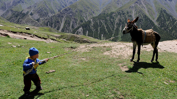¿Por qué este país asiático intenta comprar todos los burros de África?
