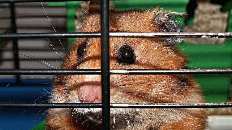 La muerte de un hámster provoca un motín en una cárcel del Reino Unido