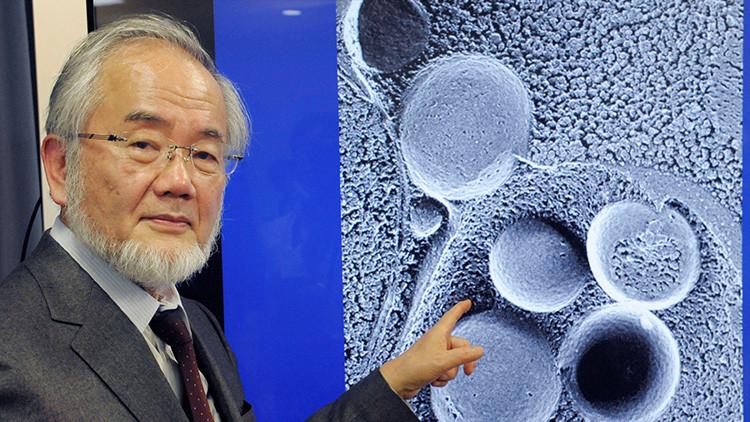 Premio Nobel de Medicina por un estudio sobre la autofagia: ¿Qué rayos es esto?
