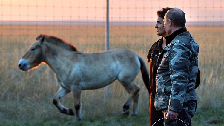 VIDEO: Putin visita una reserva ecológica en los Urales y libera a 6 caballos salvajes