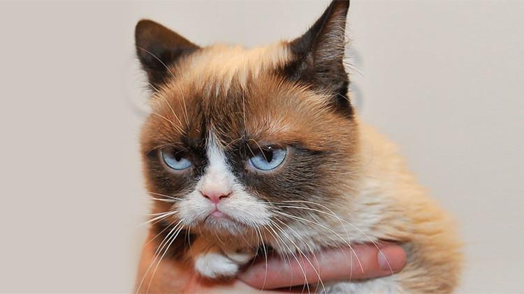 ¿Tienen miedo de los gatos? El Estado Islámico prohíbe la cría de felinos