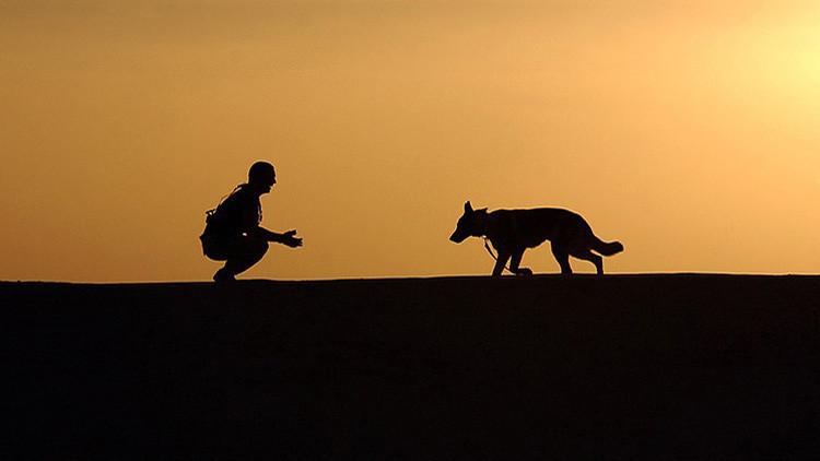"""""""Habrá que reescribir la historia"""": Hallan restos de uno de los primeros perros domesticados"""