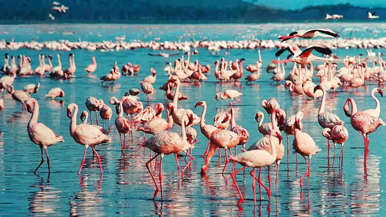 El baile más flamenco: encuentre a la bailarina entre decenas de aves