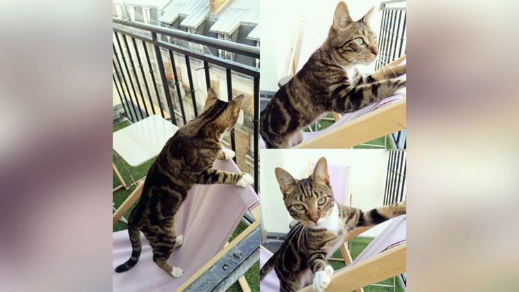 Un gato logra votar en las primarias y nadie se da cuenta