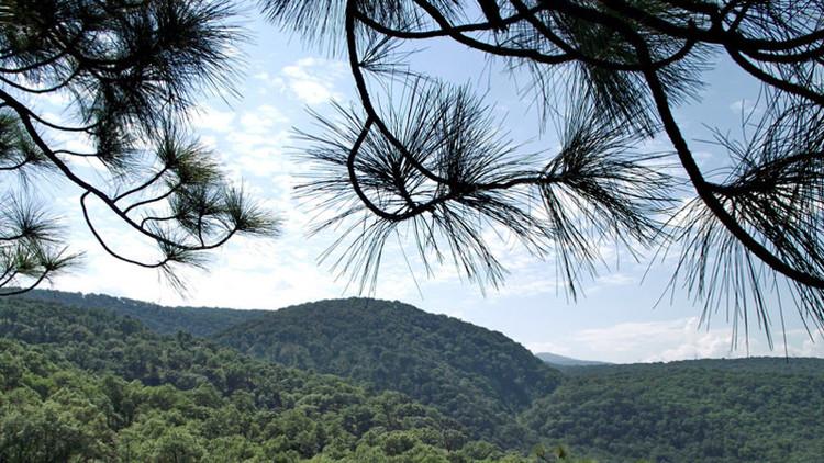 México: Un proyecto geotérminco pone en peligro la relación 'yin yang' entre un bosque y una ciudad