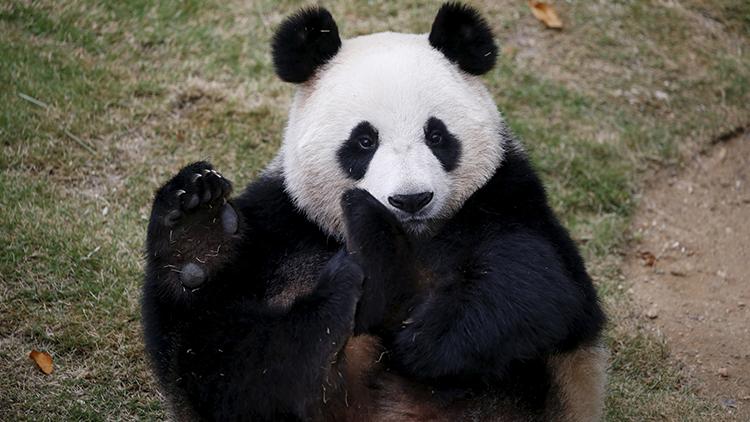 Kung Fu Panda: Un imprudente joven recibe una paliza en un zoológico en China (VIDEO)