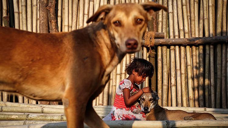 Prometen oro por matar a perros errantes en el sur de la India