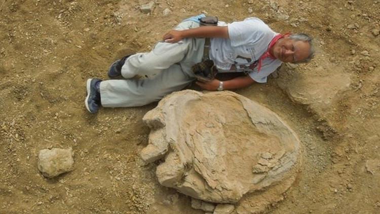 Shinobu Ishigaki, el profesor de la Universidad de Ciencias de Okayama, muestra el tamaño de la huella de dinosaurio descubierta en el desierto de Gobi.
