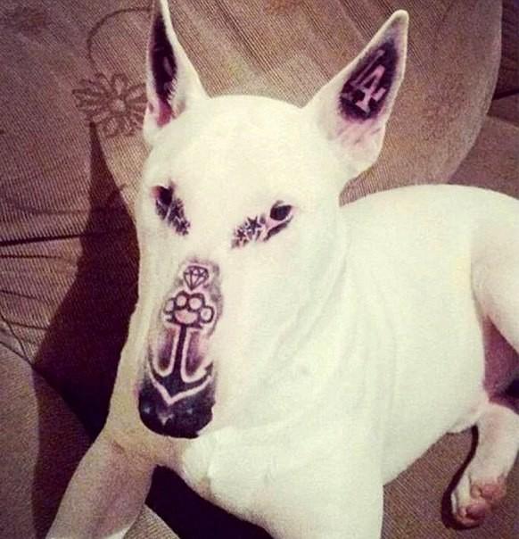 El perro tatuado