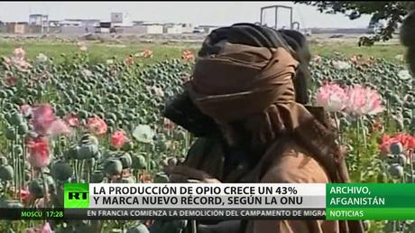 La producción de opio crece un 43% y marca nuevo récord, según la ONU