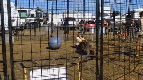 Momento terrorífico: un tigre de circo ataca a su domadora frente a un grupo de escolares