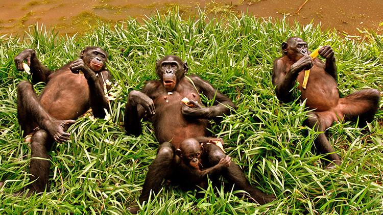 Los humanos provocamos la extinción de 72 especies al día