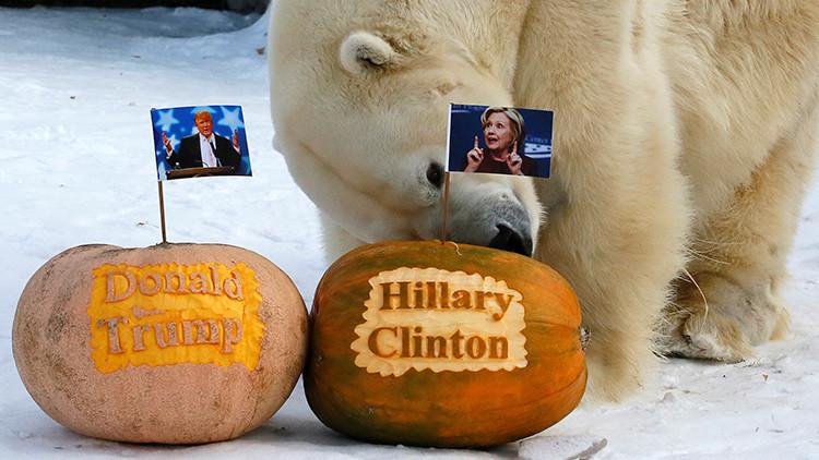 Un oso polar ruso ya sabe quién será el nuevo presidente de EE.UU.