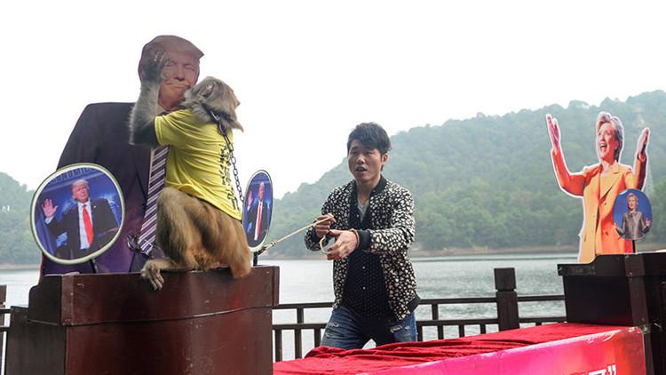 Un 'mono-profeta' chino anuncia el nuevo presidente de EE.UU.