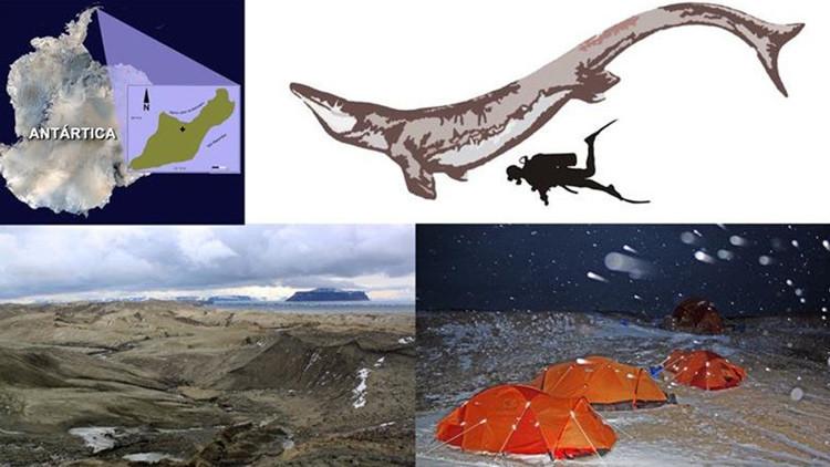 Descubren al depredador marino más grande de la Antártida