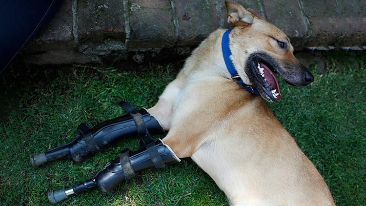 VIDEO: Un perro torturado que sobrevivió a Los Zetas 'llega' al Congreso mexicano