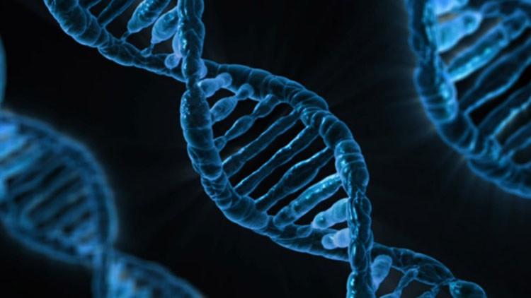 Descubren una revolucionaria técnica que permite curar genes dañados y prolongar la vida