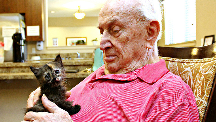 Llevan gatitos abandonados a un asilo y esto fue lo que pasó