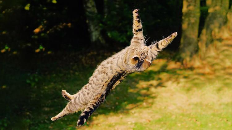 ¿Por qué la ciencia no deja de preguntarse qué hacen los gatos para caer siempre de pie?