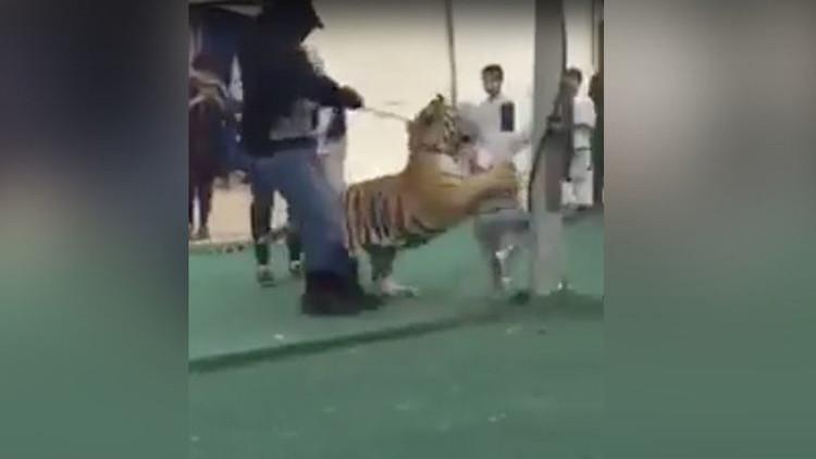 FUERTES IMÁGENES: Un tigre ataca a una niña en un mercado saudita