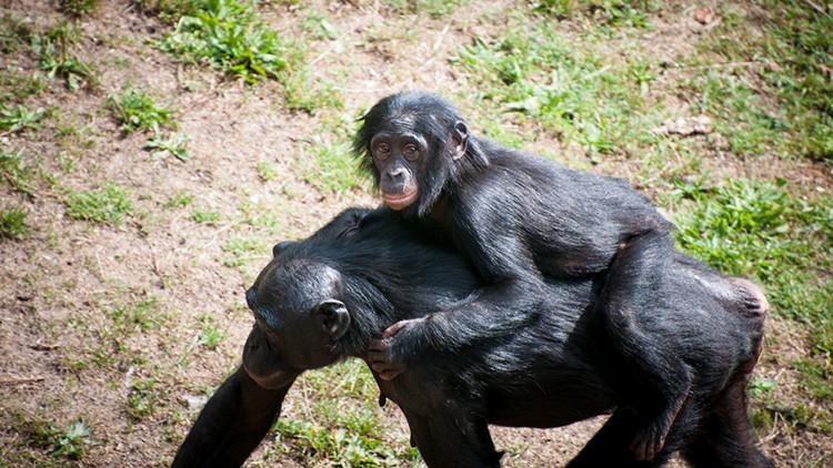 Descubren una similitud de funciones entre el rostro humano y el trasero de los monos