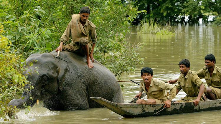 5 cosas horribles que no te contaron en el documental sobre el parque nacional indio de Kaziranga