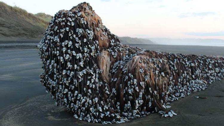 """""""¿Alguien sabe qué es esto?"""": Encuentran un """"monstruo marino con rastas"""" en Nueva Zelanda"""
