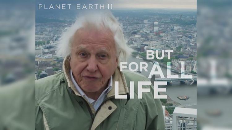La aclamada serie documental de la BBC sobre naturaleza finaliza con un emotivo y urgente mensaje