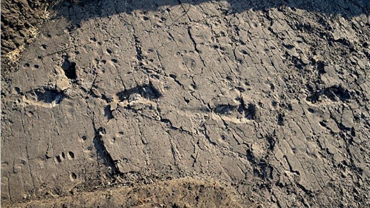 ¡Hola Chewbacca!: Encuentran en África las huellas inusualmente grandes de un homínido prehistórico