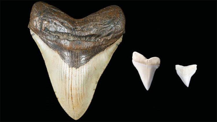 Revelan qué monstrúo prehistórico pudo inspirar los mitos marinos de los mayas