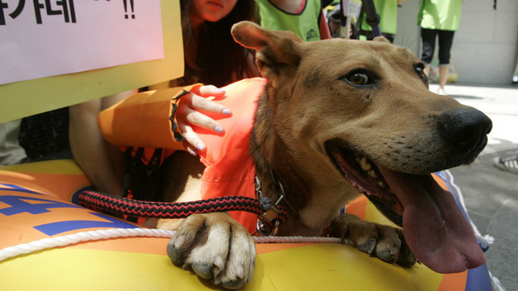 ¿Fin del tabú alimentario?: Corea del Sur comienza a erradicar el consumo de carne de perro