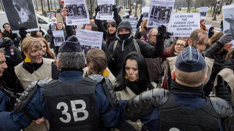 FUERTES IMÁGENES: Activistas veganos irrumpen en un matadero en Francia
