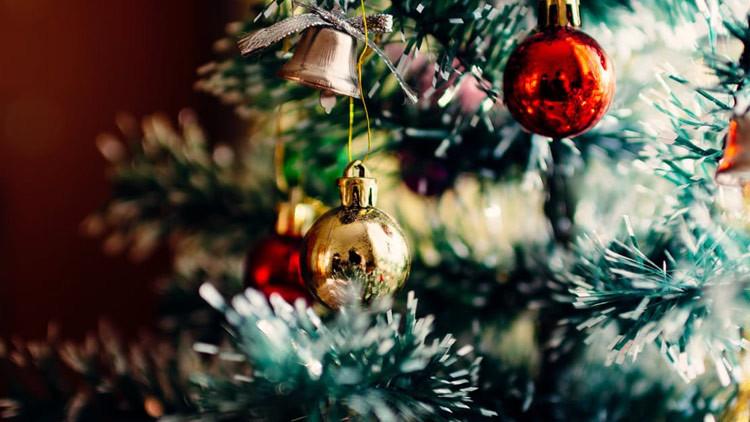 Una mortífera serpiente venenosa se esconde en un árbol de Navidad (Foto)