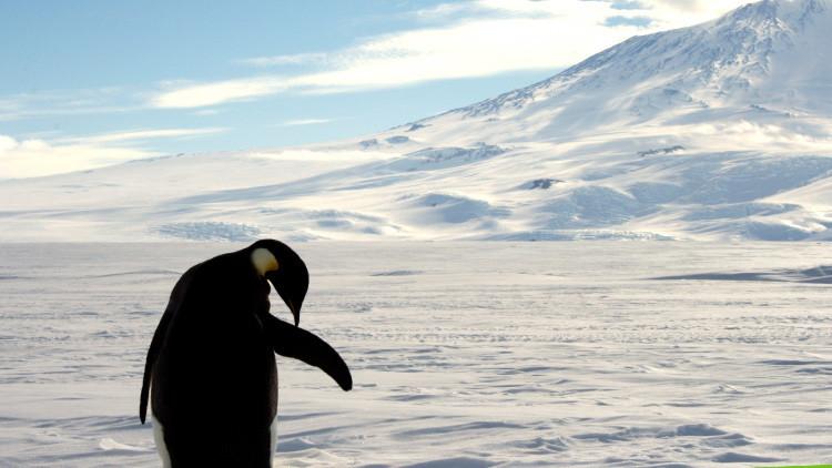 VIDEO: Un robot submarino revela el colorido mundo bajo el hielo antártico