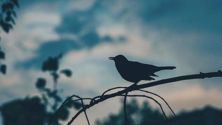 Un ave de hace 90 millones de años podría ayudar a predecir el futuro de la Tierra
