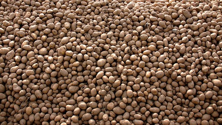 Esto es lo que pasa si comes solo patatas durante un año (Fotos)