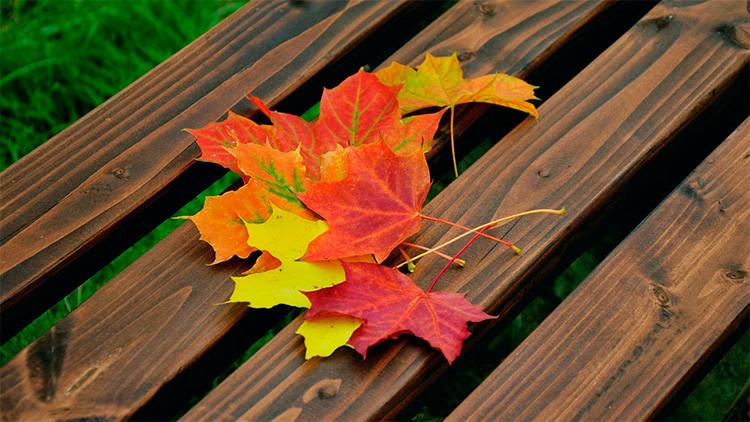 FOTOS: Japón convierte en arte las hojas caídas de los árboles