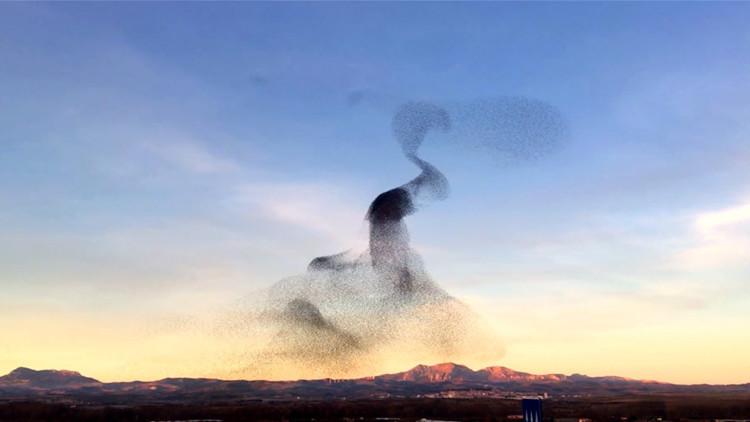 Video: Una enorme bandada de aves baila al unísono en un 'show' hipnotizante