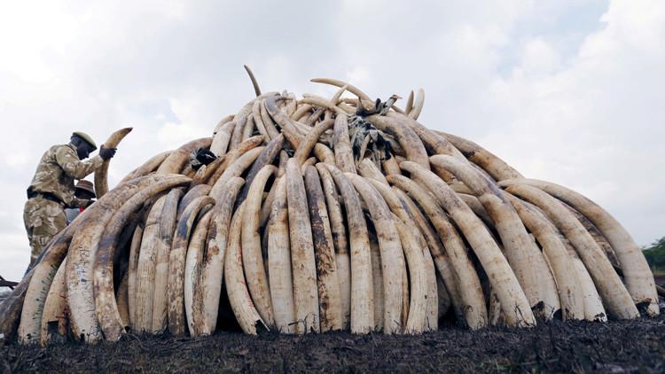 El 'dragón' se apiada del elefante: China, el mayor consumidor de marfil, prohibirá su venta en 2017