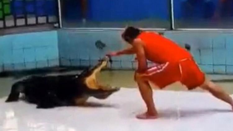 VIDEO: Un cocodrilo muerde el brazo de su entrenador y realiza un 'giro mortal'