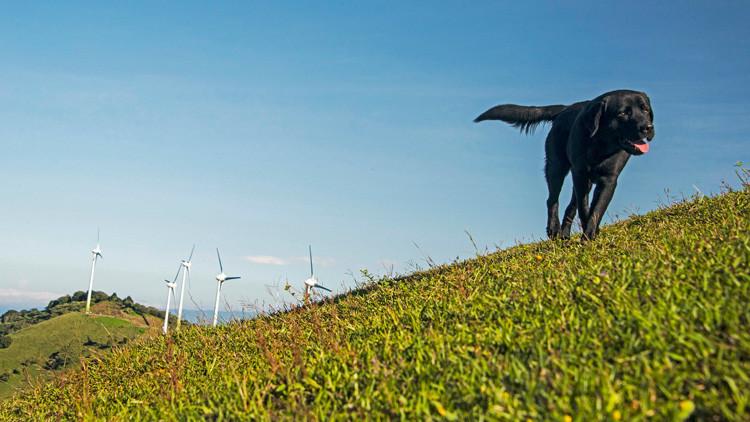 El 'paraíso' de las renovables: Costa Rica renunció durante casi todo el 2016 al crudo y al carbón