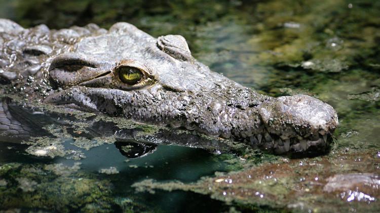 Una turista francesa intenta hacerse un 'selfie' con un cocodrilo y resulta herida grave