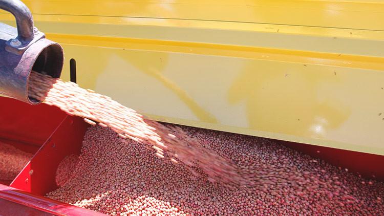 Argentina anuncia una rebaja a los impuestos por exportaciones de soja
