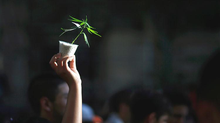 La Policía argentina incauta más de 10 toneladas de marihuana