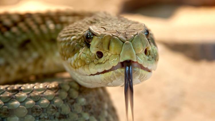 Cancelan un vuelo a Dubái tras hallarse una serpiente en el avión