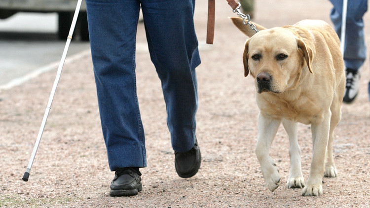Un ciego revela los abusos que sufre a través de una cámara GoPro colocada en su perro (VIDEO)